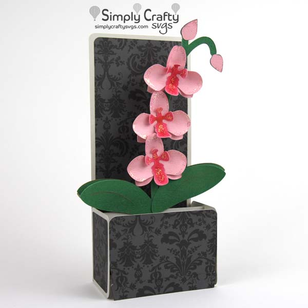 Pink Orchid Box Card SVG File